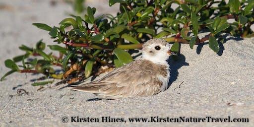 Shorebird & Migratory Bird Photography Workshop