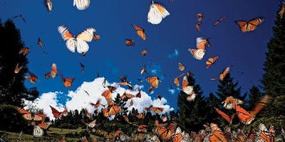 Santuario de las Mariposas Monarca