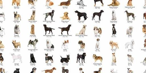 Amazing Pet Expos bismark meet the breed
