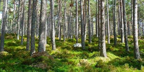 Douche de forêt billets
