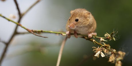 Dunsmore: Small Mammal Ecology and Conservation tickets