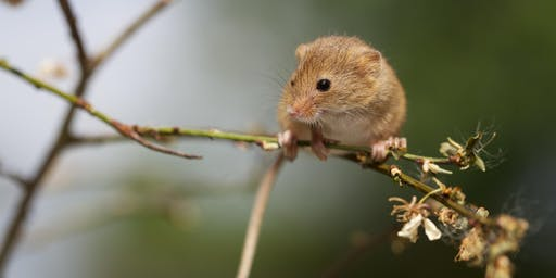 Dunsmore: Small Mammal Ecology and Conservation