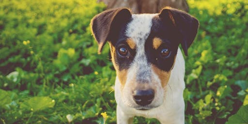 Healthy Pets Initiative: Free Vaccine & Microchip Clinic - Danielle Ruiz-Murphy Center