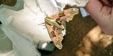 Dunsmore: National Moth Night tickets