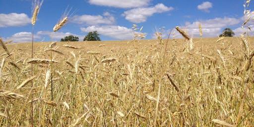 Lammas Harvest Lunch