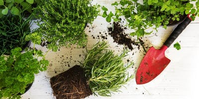 Herb Garden: Planter Customization with  Miracle-Gro - Short Hills