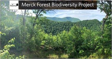 Merck Forest & Farmland Center BioBlitz 2019