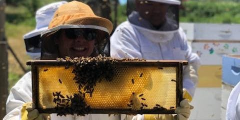 The Bee Experience at Earthbound Farm