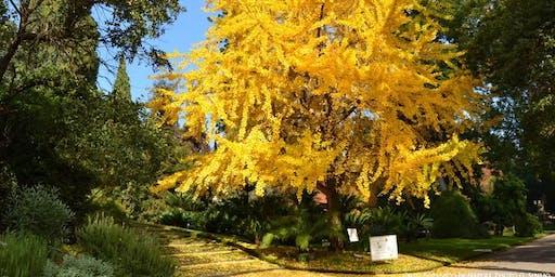 Dimore Storiche - visita all'Orto Botanico e a Villa di Donato