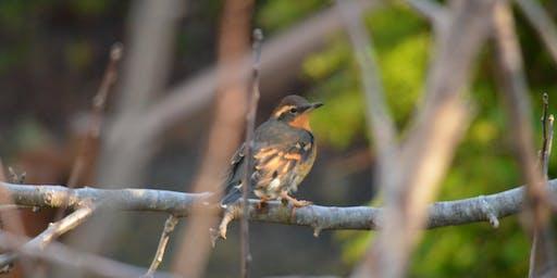 Birding at Millicoma Marsh Trail
