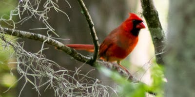Nature In Focus Bird Walk @ Riverside Park