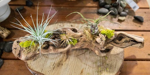 DIY Airplant Workshop | Folsom