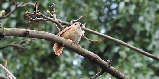 Parkland Walk Guided Bird Talk