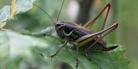 Parkland Walk Guided Bug Talk tickets