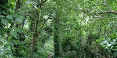 Parkland Walk Guided Tree Talk tickets