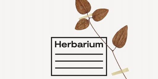 Herbarium: Musings & Observations a Writing and Botanical Workshop