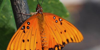 Art, Science, and the Gulf Fritillary: 3 day workshop at the Stone Garden