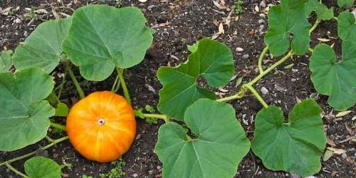 Workshop Wednesday, Kids Plant a Pumpkin!