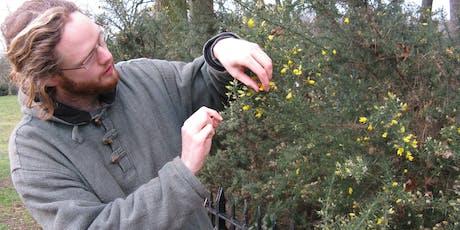 Bloomsbury Foraging with Ethnobotanist Jason Irving & Slade Summer School tickets