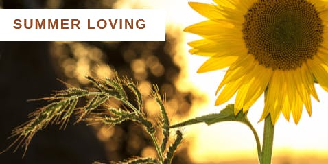 Summer Loving: A Day of Therapeutic Yoga to Nourish and Nurture