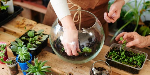 Terrarium Building Bar with Miracle-Gro - Kenwood Towne Centre
