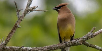 Bird Basics