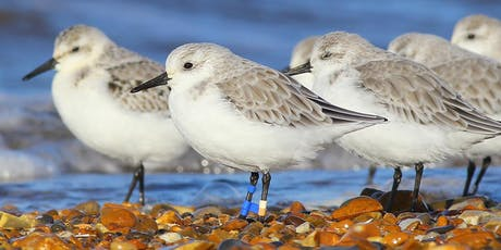 Easy Birding at RSPB Titchwell Marsh tickets