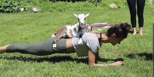 Goat Yoga @ Evergreen Oasis Farm & Market