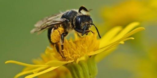 MGAT Landscape Management Practices to Protect Pollinators - UGA Gwinnett