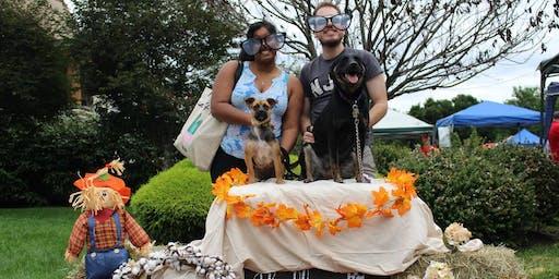 Newtown Vet Pet Fair