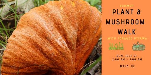 Summer Edible Plant & Mushroom Walk - Mayo. QC