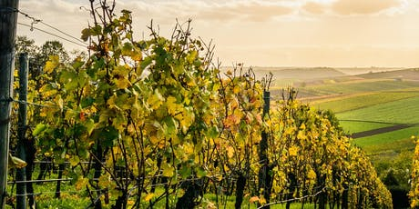 Harvest Lunch in the Vineyard tickets