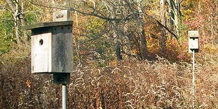 Building Nests for Local Birds: Birdhouse Making Workshop with Jim Critchley