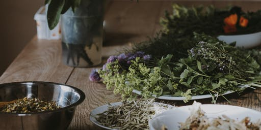 Using and Preserving Medicinal Herbs