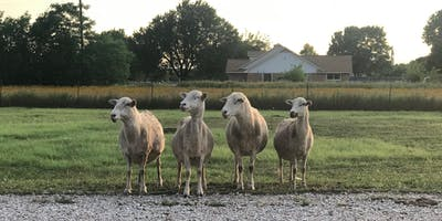 Sheep 101 - Free workshop & Demonstration