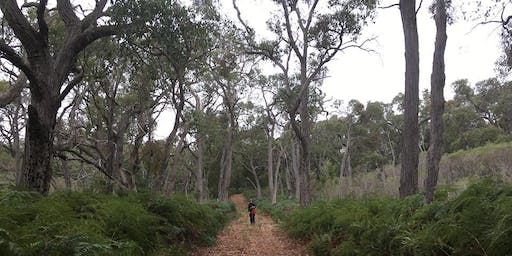 Mt Gambier Weekend Walks for Women - Telford Scrub 21st of July