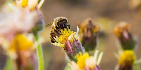 Pollinator Pack Workshop at Summer Wednesdays! tickets
