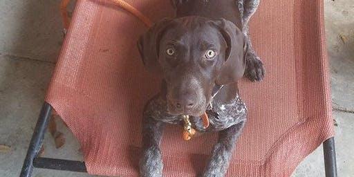 Zen - Calm Dog Pack Walk