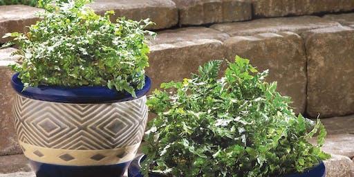ONE DAY CERAMICS WORKSHOP: Create your unique ceramic flower pot