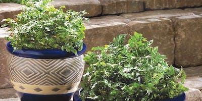 ONE DAY CERAMICS WORKSHOP: Create your unique ceramic flower pot - 26 August
