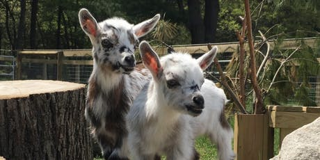 Family Goat Yoga tickets