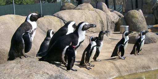 Breakfast with an Animal - Penguins