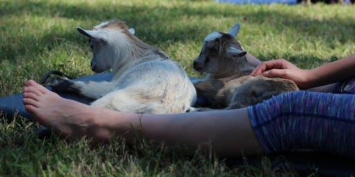 Goat Yoga Texas - Thurs, Aug 1 @ 5:30PM
