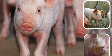Shakespeare Swine Seminar 2019 tickets