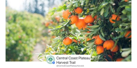 Pick Your Own Oranges : Wyuna Farms Central Coast Plateau Harvest Trail  tickets