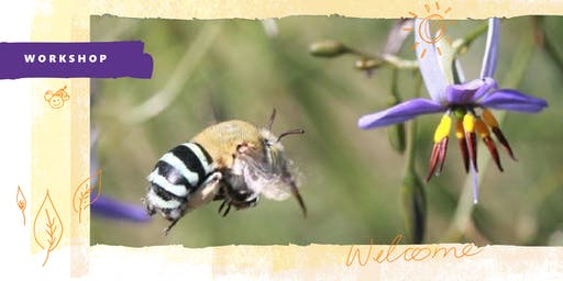 Green Living: Native bees in your backyard. Presented by the City of Holdfast Bay.