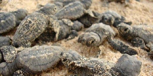 Science Week Sea Turtle Talk - Rosebud Library