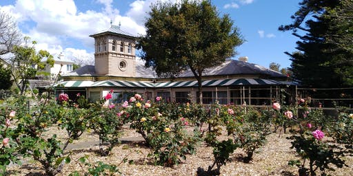 Samson House Annual Rose Pruning 2019