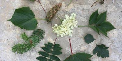 Summer Tree Identification