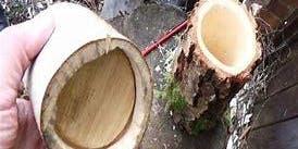 Rusland Show 2019 'Land to Hand' Children's Classes Workshop: Carve a greenwood shrink pot